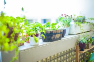 風水キッチンの観葉植物